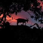 Animals Photography 2
