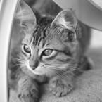 Animals Photography 4