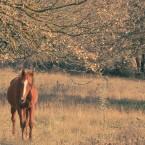 Animals Photography 5