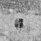 Animals Photography 10
