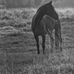 Animals Photography 15